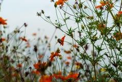 Manosee la abeja en la plantación de las flores foto de archivo libre de regalías