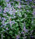 Manosee la abeja en vuelo Imagen de archivo
