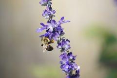 Manosee la abeja que hace una comida para sí mismo Fotografía de archivo