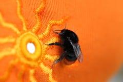 Manosee la abeja que se sienta en un paño anaranjado brillante con el modelo del sol Imagenes de archivo