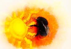 Manosee la abeja que se sienta en un paño anaranjado brillante con el modelo del sol y el fondo suavemente borroso de la acuarela Imagenes de archivo