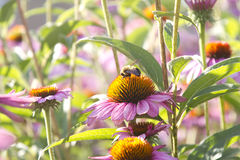 Manosee la abeja que trabaja difícilmente Imagen de archivo
