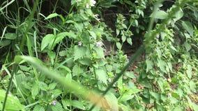 Manosee la abeja que vuela sobre las flores en el campo verde almacen de metraje de vídeo