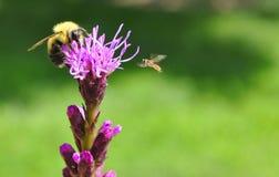 Manosee la abeja tiene un visitante Imagen de archivo libre de regalías