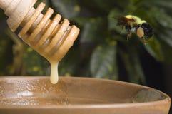 Manosee la abeja y la miel Imagen de archivo