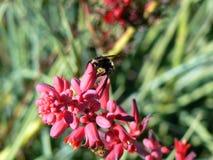 Manosee la consumición de la abeja Imagen de archivo