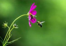 Manosee la línea que espera cola de la abeja Imagen de archivo
