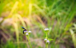 Manosee la polinización de la abeja Foto de archivo libre de regalías