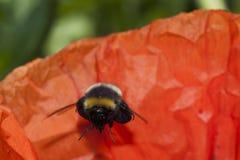 Manosee las abejas Imagen de archivo