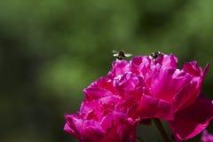Manosee las abejas Fotos de archivo