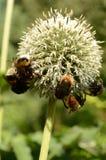 Manosee las abejas en el trabajo fotos de archivo