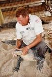 Manovra lottante di armi della fauna selvatica dei terreni paludosi di Florida del parco dell'alligatore Fotografie Stock Libere da Diritti