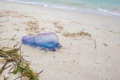 Manowar en la playa Imágenes de archivo libres de regalías