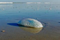 Manowarkwallen op het strand Stock Foto