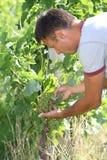 manrader kryddar vinetappning Arkivfoto