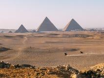 Manridninghästar med Giza pyramider som bakgrunden Royaltyfri Fotografi