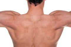 Mans back Stock Image
