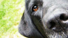 Free Mans Best Friend Stock Photography - 22084062