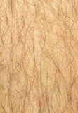 Mans hairy leg. With dry skin Royalty Free Stock Image