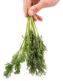 Mans hand holding dill Royalty Free Stock Photography