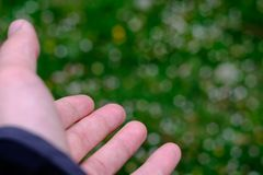 Mans hand offering the beauty of a green field full of flowers as a blurred background. Several blurred white and yellow flowers over green grass field serves as stock photos