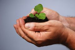 A mans hand planting Stock Image