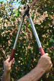 Mans hand use a Tree Pruner. To cut a tree branch in a home garden Stock Photo
