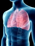 A mans lungs. 3d rendered medically accurate illustration of a mans lungs vector illustration