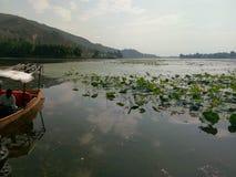 Mansbal lake -Kashmir valley. Fascinating Stock Image
