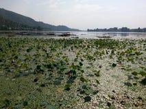 Mansbal lake -Kashmir valley Stock Image