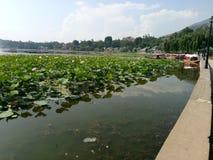 Mansbal lake -Kashmir valley Royalty Free Stock Images