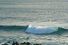 Mansimning på surfingbrädan för att fånga vågor på Stilla havet, Hanga Roa, påskö, Chile royaltyfri bild
