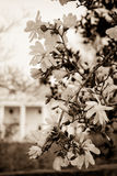 Mansion Blooms royalty free stock images