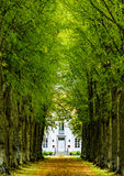 Mansion at the end of a green alley. Out of ancient trees Royalty Free Stock Photography