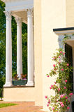 Mansion porch and roses. A view of a pretty climbing rose bush growing on the side doorway of an old southern mansion with white columns on the main porch in the Stock Images