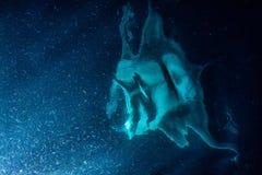 Manta есть планктон криля на ноче Стоковое Изображение RF