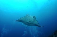 Manta de flottement Image stock