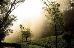 Manta de la niebla Foto de archivo libre de regalías