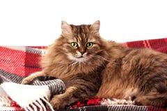 Manta de las lanas y un gato Fotografía de archivo libre de regalías