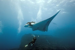 Manta and diver photographer on the reef Stock Photography