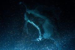 Manta eating krill plankton and krill at night royalty free stock photography