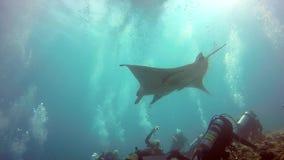 Manta nurkowie i promień relaksujemy w słońcu podwodnym w oceanie Maldives zbiory