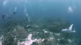 Manta oceanica in Raja Ampat 4k stock footage