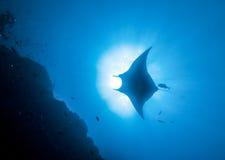 Manta, onderwaterbeeld Stock Afbeelding