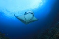 Manta Ray stock image