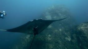 Manta Ray dans l'eau du fond parmi des récifs et des plongeurs banque de vidéos
