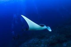 Manta Ray en scuba-duikers Royalty-vrije Stock Afbeeldingen