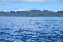 Manta Ray Fin på havsyttersida Royaltyfria Bilder