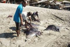 Manta Ray. Fishermen cutting the catch- sea cat Manta Ray on the island of Lamalera,Indonesia Royalty Free Stock Images