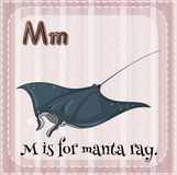 Manta ray Royalty Free Stock Images